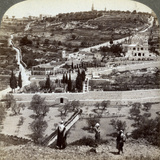 The Garden of Gethsemane and the Mount of Olives  Palestine  1908