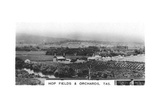 Hop Fields and Orchards  Tasmania  Australia  1928