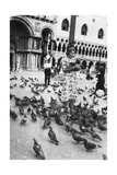 Woman Surrounded by Pigeons  St Mark's Square  Venice  Italy  1938