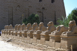 Line of Ram-Headed Sphinxes  Temple of Rameses Ii  Karnak  Egypt  13th Century Bc