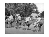 On the Way Home from Market  Jamaica  C1905