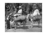 Off to the Jail  Jamaica  C1905