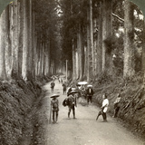 The Groves Were God's First Temples  Avenue of Noble Cryptomerias at Nikko  Japan  1904