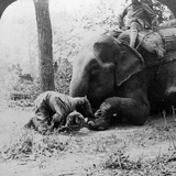 Mahout Removing a Thorn from an Elephant's Foot  Behar Tiger Shoot  India  C1900s