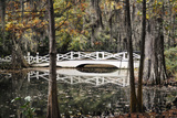 Wooden Bridge in Swamp of Charleston  SC