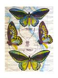 Butterfly Map III