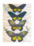 Butterfly Map II