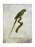 Parrot Jungle III