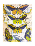 Butterfly Map I