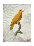 Parrot Jungle V