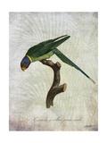 Parrot Jungle IV