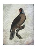 Parrot Jungle I
