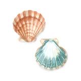 Watercolor Shells I