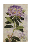 Rhododendron II