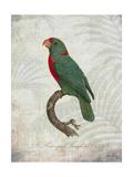 Parrot Jungle VI