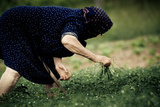 Old Woman Farming in Greece