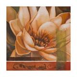 Flor de Loto II