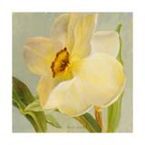 Daffodil Sky II