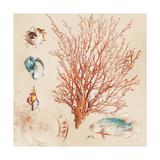 Coral Medley II Giclée premium par Lanie Loreth