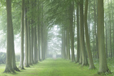 Beech Tree Avenue in Morning Mist  Cotswolds  Gloucestershire  England Summer