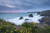 Wildflowers Growing on the Clifftops Above Bedruthan Steps on a Stormy Evening  Cornwall  England