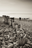 Weathered Wooden Groyne on Bossington Beach at Sunset  Exmoor National Park  Somerset