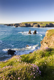 Clifftop View of Porthcothan Bay with Spring Wildflowers  Cornwall  England Spring