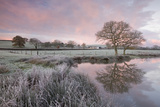 Frosty Conditions at Dawn Beside a Pond in the Countryside  Morchard Road  Devon  England Winter