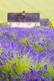 Lavender Fields, Cotswolds, Worcestershire, England, UK Papier Photo par Nadia Isakova