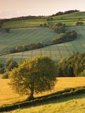 Rolling Farmland in Summertime  Devon  England Summer