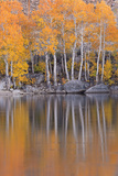 Golden Coloured Fall Foliage and Reflections on the Shores of Intake 2 Lake in the Eastern Sierras