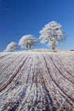 Hoar Frosted Farmland and Trees  Bow  Mid Devon  England Winter
