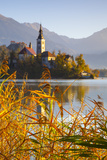 Bled Island with the Church of the Assumption and Bled Castle Illuminated at Dusk  Lake Bled