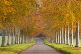 Avenue of Colourful Trees in Autumn  Dorset  England November