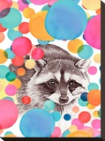 Cheery Raccoon