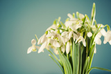 White Snowdrops Flowers