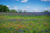 Wildflower Field in Texas Spring