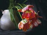 Parrot Tulips in White Pitcher