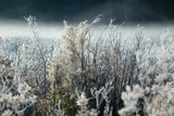 Frosty Sage Abstract IV  Grand Teton  Wyoming