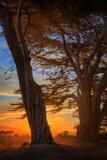 Magical Cypress Sunrise  Point Reyes National Seashore