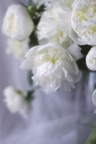 White Peonies in a Vase