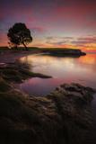 Lone Tree at Sunset  San Pablo Bay  Northern California