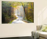 Road Through Autumn Woodland  Saxon Switzerland  Saxony  Germany