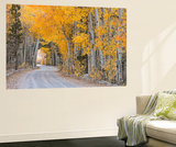 Dirt Road Winding Through a Tree Tunnel  Bishop  California  USA Autumn (October)