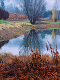 Reflection at Autumn Vineyard  Calistoga Napa Valley