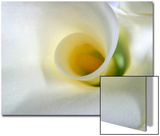 White Calla Lily Abstract