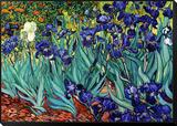 Iris, Saint-Rémy, vers 1889 Reproduction montée et encadrée par Vincent Van Gogh
