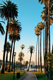Los Angeles Downtown Park View with Palm Trees