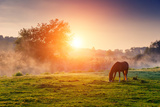 Arabian Horses Grazing on Pasture at Sundown in Orange Sunny Beams Dramatic Foggy Scene Carpathia