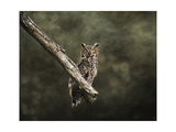 Great Horned Owl at Shiloh